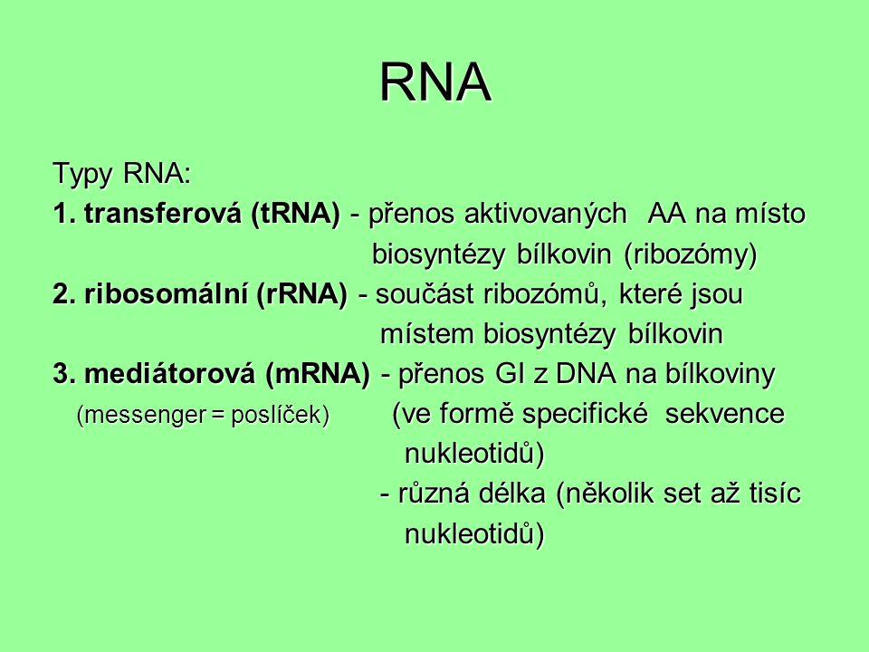 RNA Typy RNA: 1.