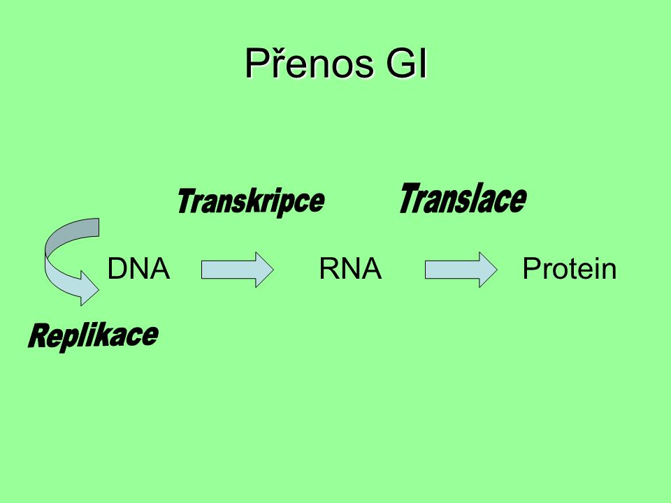 Přenos GI DNA RNA Protein