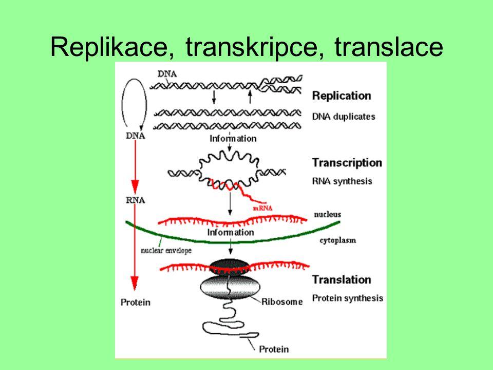 Replikace, transkripce, translace