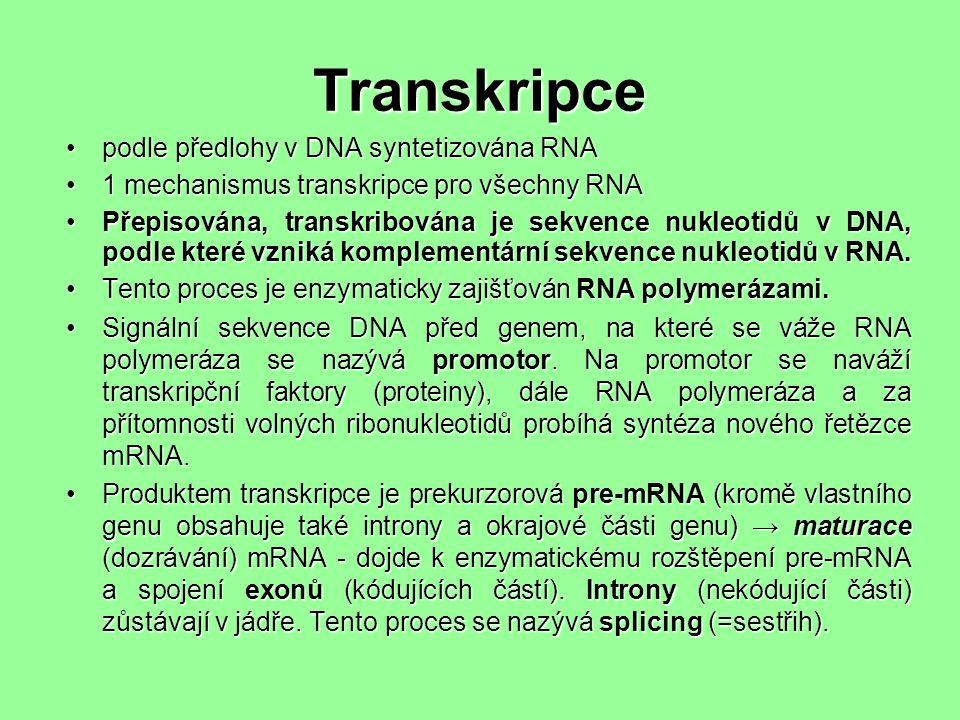 Transkripce podle předlohy v DNA syntetizována RNApodle předlohy v DNA syntetizována RNA 1 mechanismus transkripce pro všechny RNA1 mechanismus transkripce pro všechny RNA Přepisována, transkribována je sekvence nukleotidů v DNA, podle které vzniká komplementární sekvence nukleotidů v RNA.Přepisována, transkribována je sekvence nukleotidů v DNA, podle které vzniká komplementární sekvence nukleotidů v RNA.