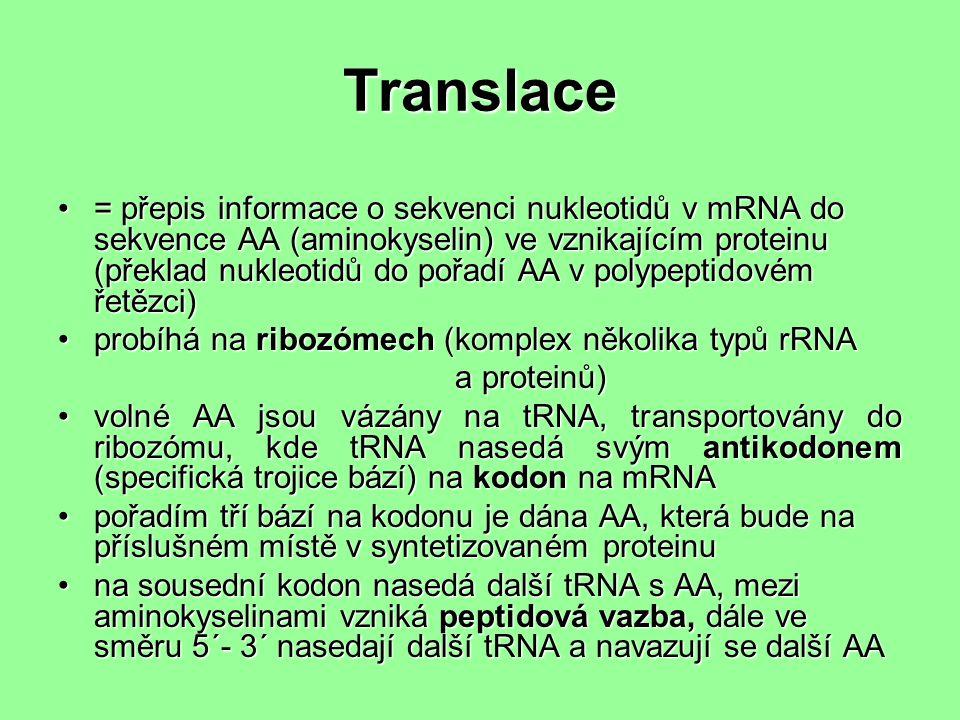 Translace = přepis informace o sekvenci nukleotidů v mRNA do sekvence AA (aminokyselin) ve vznikajícím proteinu (překlad nukleotidů do pořadí AA v polypeptidovém řetězci)= přepis informace o sekvenci nukleotidů v mRNA do sekvence AA (aminokyselin) ve vznikajícím proteinu (překlad nukleotidů do pořadí AA v polypeptidovém řetězci) probíhá na ribozómech (komplex několika typů rRNAprobíhá na ribozómech (komplex několika typů rRNA a proteinů) a proteinů) volné AA jsou vázány na tRNA, transportovány do ribozómu, kde tRNA nasedá svým antikodonem (specifická trojice bází) na kodon na mRNAvolné AA jsou vázány na tRNA, transportovány do ribozómu, kde tRNA nasedá svým antikodonem (specifická trojice bází) na kodon na mRNA pořadím tří bází na kodonu je dána AA, která bude na příslušném místě v syntetizovaném proteinupořadím tří bází na kodonu je dána AA, která bude na příslušném místě v syntetizovaném proteinu na sousední kodon nasedá další tRNA s AA, mezi aminokyselinami vzniká peptidová vazba, dále ve směru 5´- 3´ nasedají další tRNA a navazují se další AAna sousední kodon nasedá další tRNA s AA, mezi aminokyselinami vzniká peptidová vazba, dále ve směru 5´- 3´ nasedají další tRNA a navazují se další AA