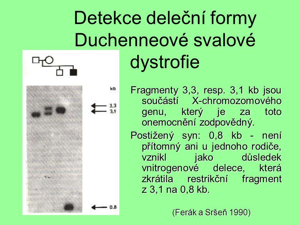 Detekce deleční formy Duchenneové svalové dystrofie Fragmenty 3,3, resp.