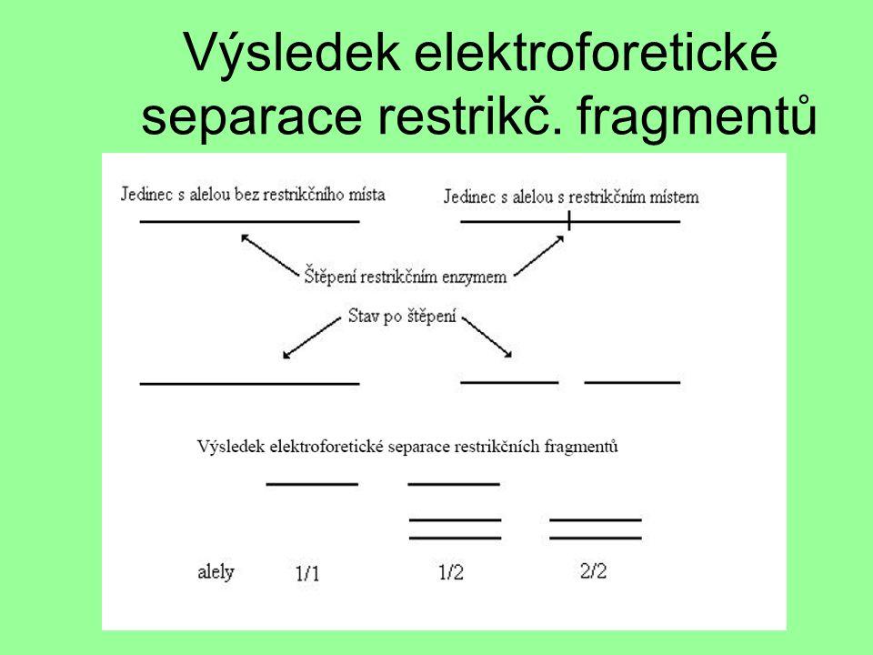 Výsledek elektroforetické separace restrikč. fragmentů