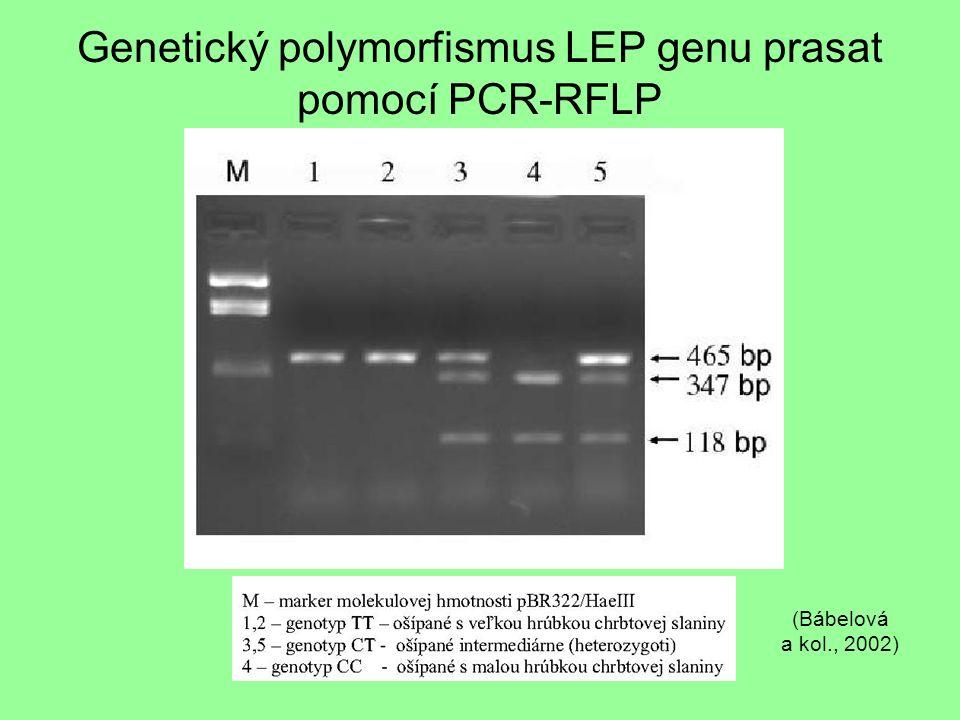 Genetický polymorfismus LEP genu prasat pomocí PCR-RFLP (Bábelová a kol., 2002)