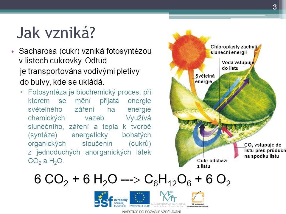 Jak vzniká? Sacharosa (cukr) vzniká fotosyntézou v listech cukrovky. Odtud je transportována vodivými pletivy do bulvy, kde se ukládá. ▫ Fotosyntéza j