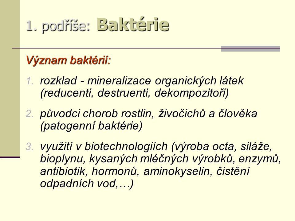 1. podříše: Baktérie Význam baktérií: 1.