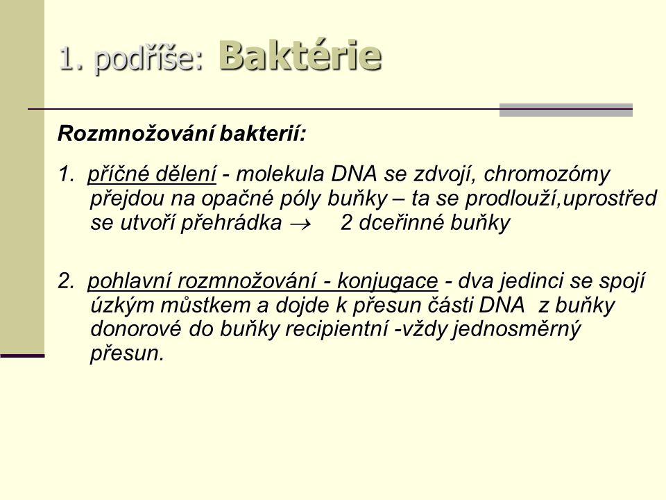 1. podříše: Baktérie Rozmnožování bakterií: 1.