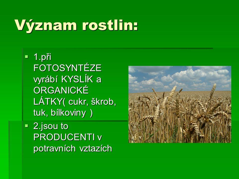 Význam rostlin:  1.při FOTOSYNTÉZE vyrábí KYSLÍK a ORGANICKÉ LÁTKY( cukr, škrob, tuk, bílkoviny )  2.jsou to PRODUCENTI v potravních vztazích