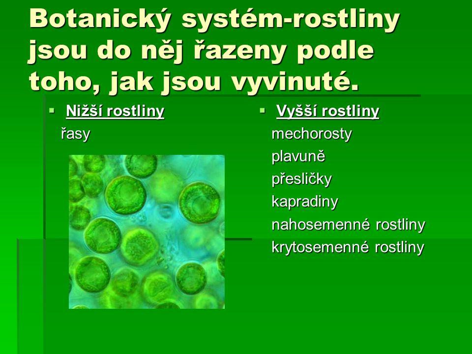 Botanický systém-rostliny jsou do něj řazeny podle toho, jak jsou vyvinuté.