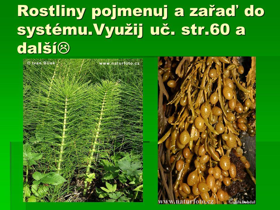 Rostliny pojmenuj a zařaď do systému.Využij uč. str.60 a další 