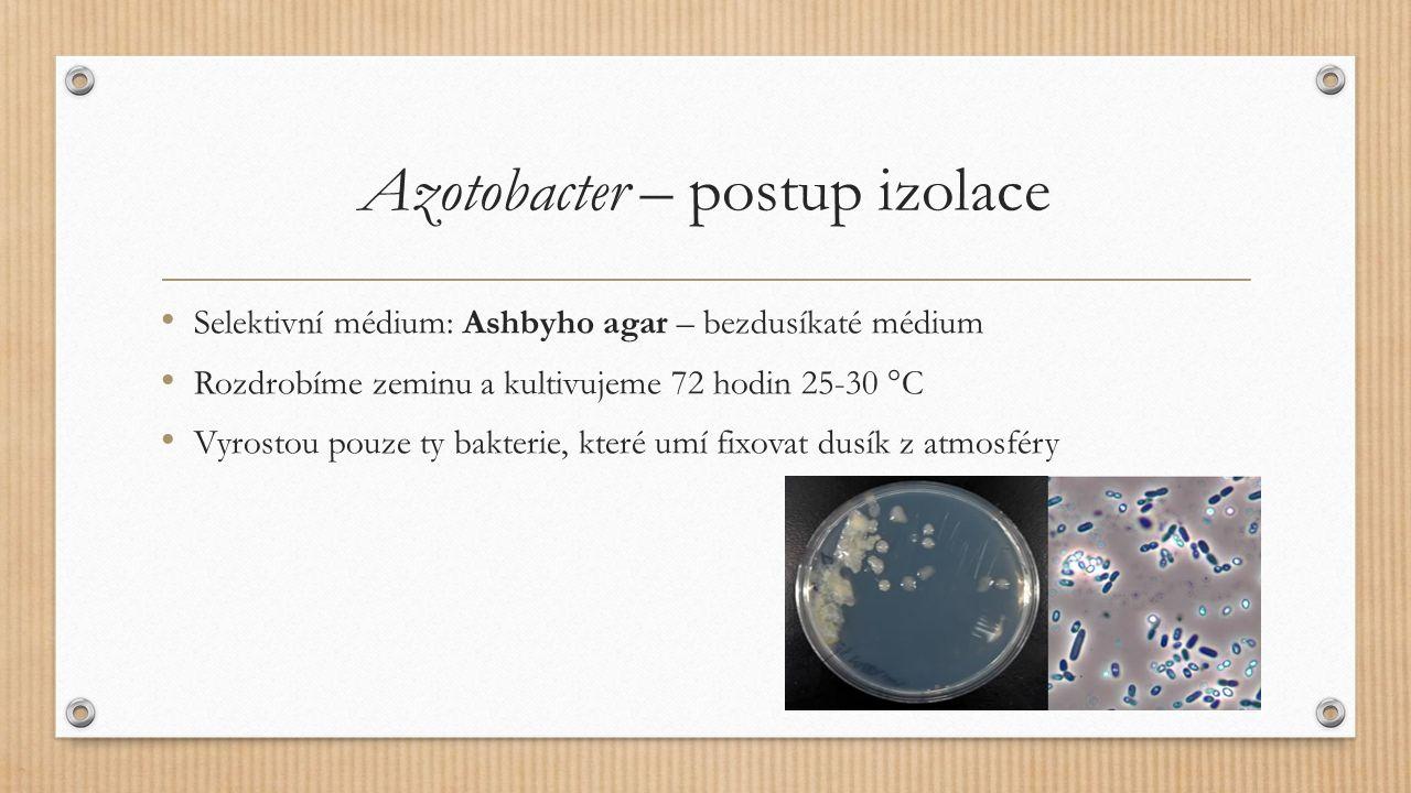 Azotobacter – postup izolace Selektivní médium: Ashbyho agar – bezdusíkaté médium Rozdrobíme zeminu a kultivujeme 72 hodin 25-30 °C Vyrostou pouze ty bakterie, které umí fixovat dusík z atmosféry