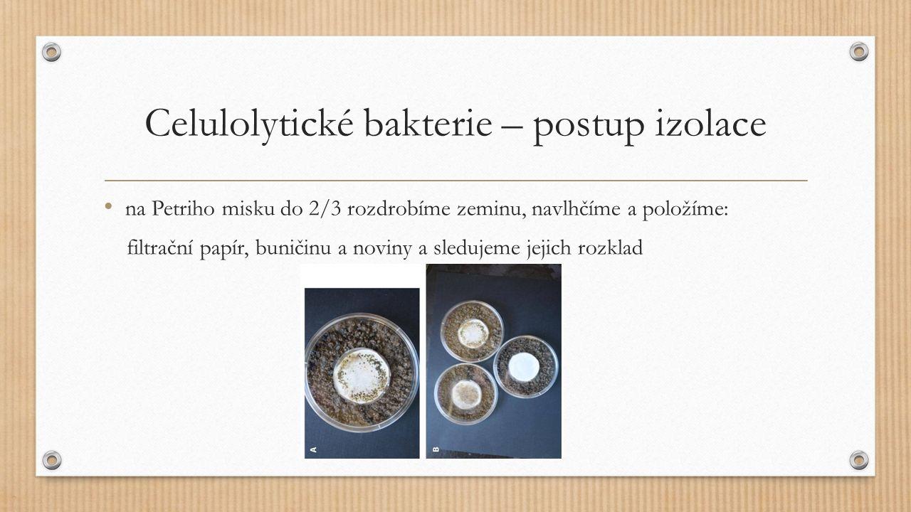 Celulolytické bakterie – postup izolace na Petriho misku do 2/3 rozdrobíme zeminu, navlhčíme a položíme: filtrační papír, buničinu a noviny a sledujem