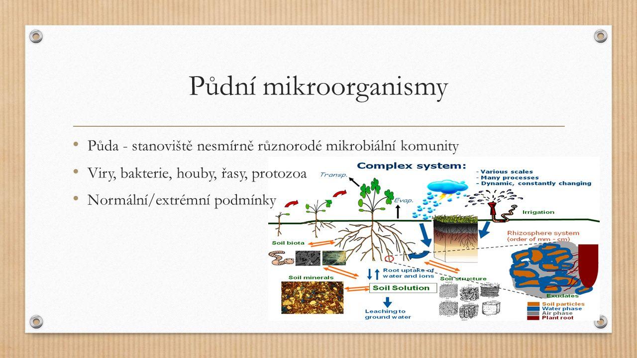 Půda Podporuje/umožňuje růst rostlin Mikroorganismy výrazně přispívají k úrodnosti půdy Rostliny mají velký vliv na mikrobiální komunity v půdy Kořenové exudáty a staré části rostlin – potrava pro MO Kolonie na půdních částicích, víc než ve vodním prostředí Všeobecně dostatek živin - heterotrofové