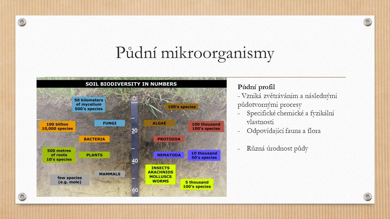 Půdní mikroorganismy Autochtonní druhy – přirozené; ta mikroflóra, která je schopna využívat odolné huminové látky; pomalá ale konstantní aktivita (G- tyčky, aktinobakterie) Zymogenní (oportunistické) druhy – závislost na přítomnosti zvýšené koncentrace; vysoká růstová rychlost a aktivita díky jednoduše využitelných substrátech, ale stále autochtonní druhy Allochtonní druhy – nenachází v půdy dobré růstové podmínky Běžné druhy: Acinetobacter, Agrobacterium, Bacillus, Celulobacter, Cellulomonas, Clostridium, Corynebacterium, Flavobacterium, Micrococcus, Mycobacterium, Pseudomonas, Staphylococcus, Streptococcus, Xanthomonas, Streptomyces, Myxococcus, Actinomyces