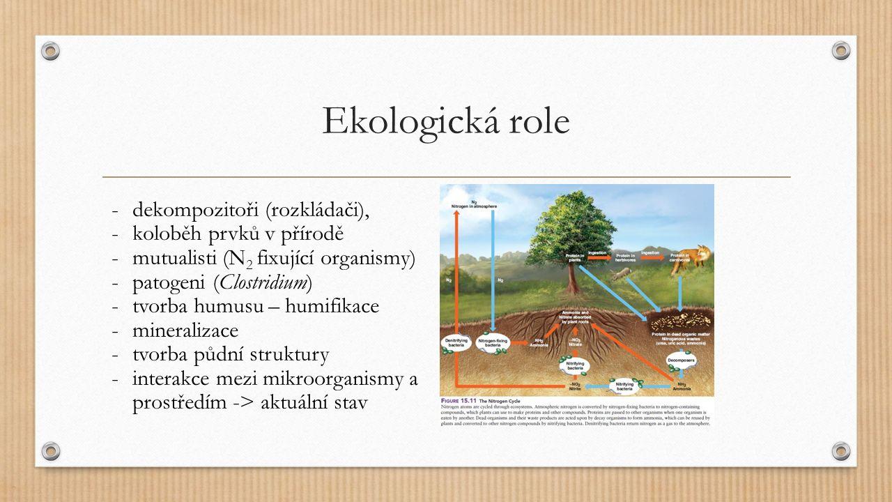 Ekologická role -dekompozitoři (rozkládači), -koloběh prvků v přírodě -mutualisti (N 2 fixující organismy) -patogeni (Clostridium) -tvorba humusu – hu