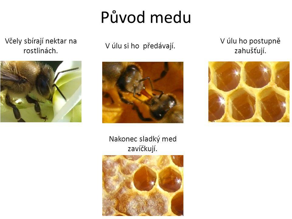 Původ medu Včely sbírají nektar na rostlinách. V úlu si ho předávají. V úlu ho postupně zahušťují. Nakonec sladký med zavíčkují.