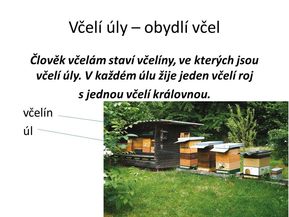 Včelí úly – obydlí včel Člověk včelám staví včelíny, ve kterých jsou včelí úly. V každém úlu žije jeden včelí roj s jednou včelí královnou. včelín úl