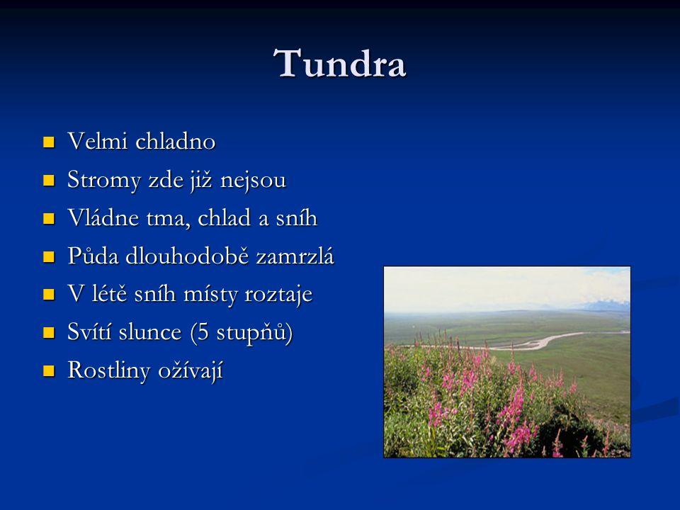 Tundra Velmi chladno Velmi chladno Stromy zde již nejsou Stromy zde již nejsou Vládne tma, chlad a sníh Vládne tma, chlad a sníh Půda dlouhodobě zamrzlá Půda dlouhodobě zamrzlá V létě sníh místy roztaje V létě sníh místy roztaje Svítí slunce (5 stupňů) Svítí slunce (5 stupňů) Rostliny ožívají Rostliny ožívají