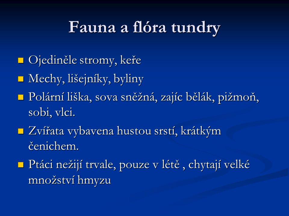 Fauna a flóra tundry Ojediněle stromy, keře Ojediněle stromy, keře Mechy, lišejníky, byliny Mechy, lišejníky, byliny Polární liška, sova sněžná, zajíc bělák, pižmoň, sobi, vlci.