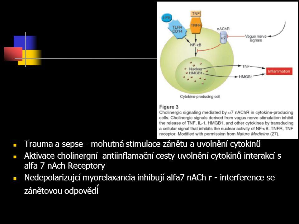 Trauma a sepse - mohutná stimulace zánětu a uvolnění cytokinů Aktivace cholinergní antiinflamační cesty uvolnění cytokinů interakcí s alfa 7 nAch Receptory Nedepolarizujcí myorelaxancia inhibují alfa7 nACh r - interference se zánětovou odpověd í