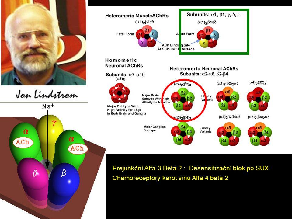 Prejunkční Alfa 3 Beta 2 : Desensitizační blok po SUX Chemoreceptory karot sinu Alfa 4 beta 2