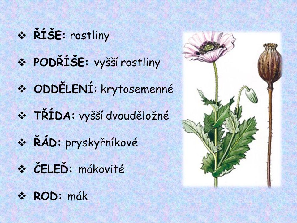  ŘÍŠE: rostliny  PODŘÍŠE: vyšší rostliny  ODDĚLENÍ: krytosemenné  TŘÍDA: vyšší dvouděložné  ŘÁD: pryskyřníkové  ČELEĎ: mákovité  ROD: mák