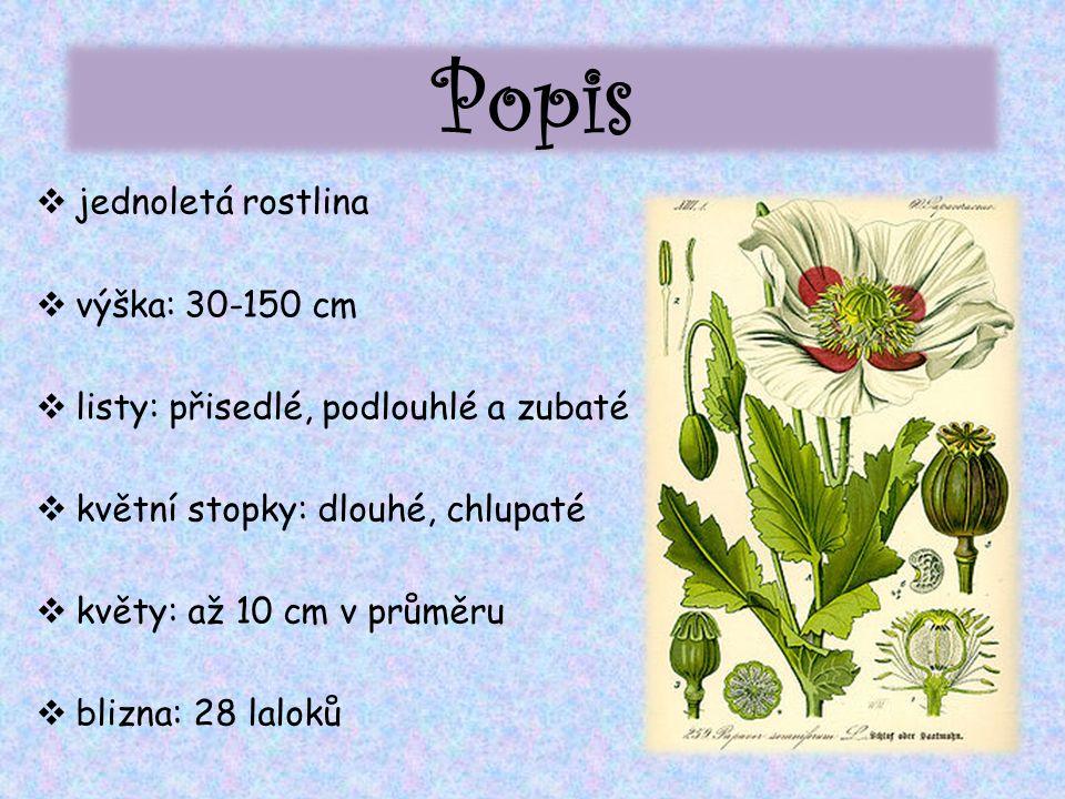 Popis  jednoletá rostlina  výška: 30-150 cm  listy: přisedlé, podlouhlé a zubaté  květní stopky: dlouhé, chlupaté  květy: až 10 cm v průměru  blizna: 28 laloků