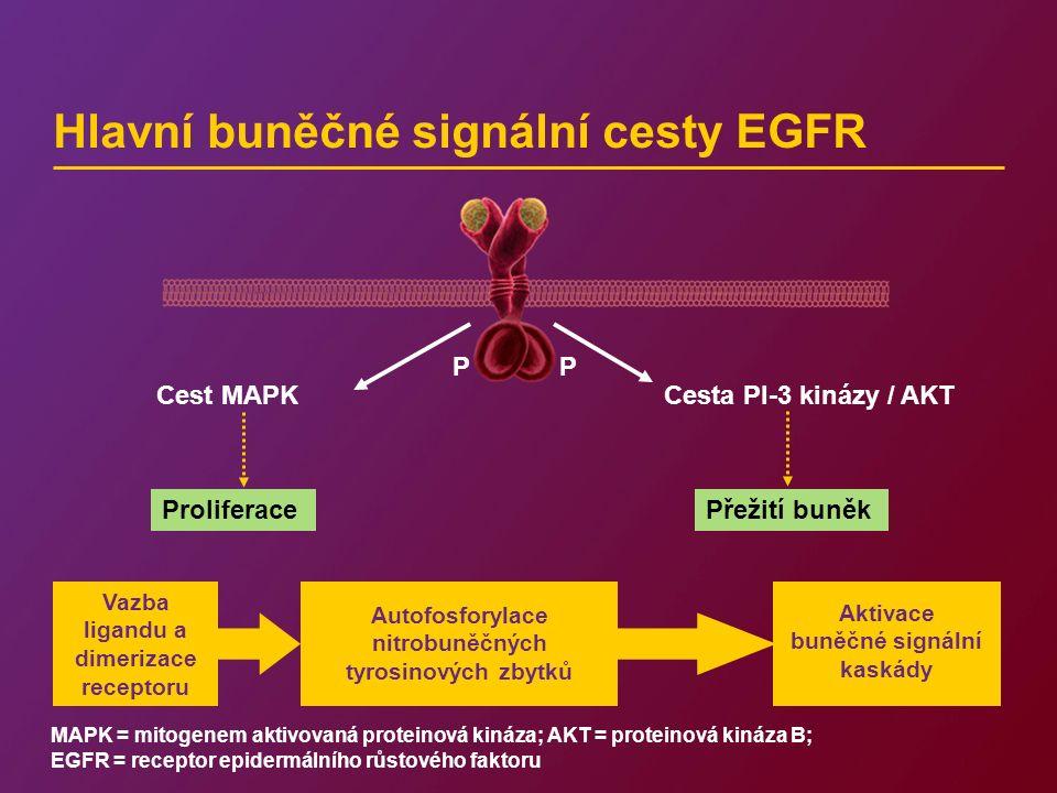 Hlavní buněčné signální cesty EGFR Cest MAPKCesta PI-3 kinázy / AKT ProliferacePřežití buněk P P Autofosforylace nitrobuněčných tyrosinových zbytků Vazba ligandu a dimerizace receptoru Aktivace buněčné signální kaskády MAPK = mitogenem aktivovaná proteinová kináza; AKT = proteinová kináza B; EGFR = receptor epidermálního růstového faktoru