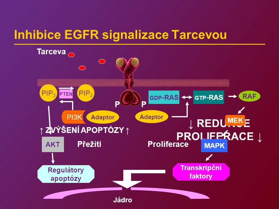 ↓ REDUKCE PROLIFERACE ↓ Inhibice EGFR signalizace Tarcevou P Jádro Adaptor Transkripční faktory MAPK MEK RAF GTP -RAS GDP -RAS Proliferace P Adaptor Přežití PIP 2 PI3K PIP 3 PTEN AKT Regulátory apoptózy Tarceva ↑ ZVÝŠENÍ APOPTÓZY ↑