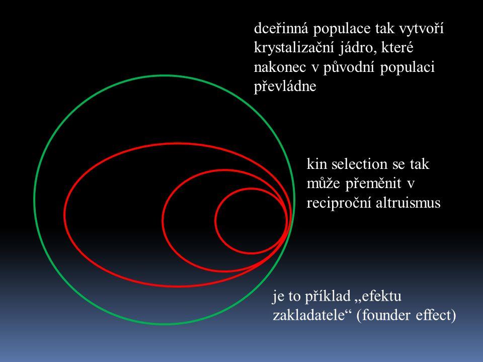 """dceřinná populace tak vytvoří krystalizační jádro, které nakonec v původní populaci převládne je to příklad """"efektu zakladatele (founder effect) kin selection se tak může přeměnit v reciproční altruismus"""