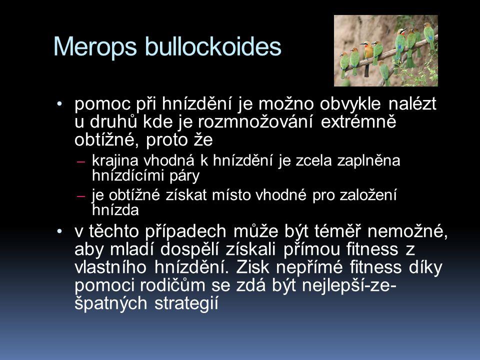 Merops bullockoides pomoc při hnízdění je možno obvykle nalézt u druhů kde je rozmnožování extrémně obtížné, proto že – krajina vhodná k hnízdění je zcela zaplněna hnízdícími páry – je obtížné získat místo vhodné pro založení hnízda v těchto případech může být téměř nemožné, aby mladí dospělí získali přímou fitness z vlastního hnízdění.