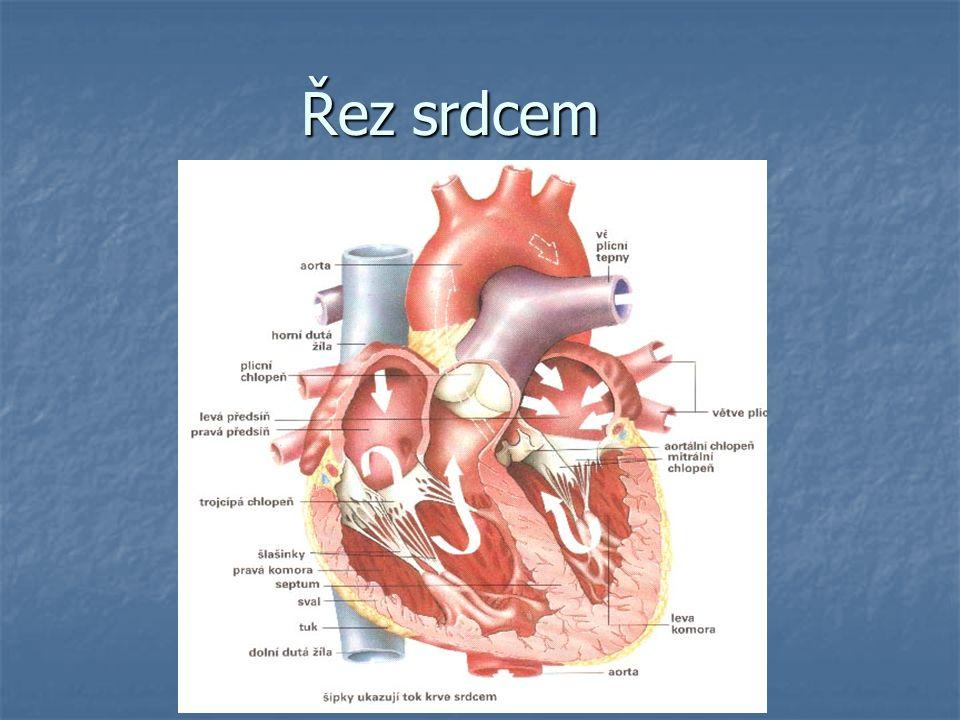 Činnost srdce Je rytmická Je rytmická SYSTOLA=stah srdečního svalu SYSTOLA=stah srdečního svalu DYASTOLA=ochabnutí srdečního svalu DYASTOLA=ochabnutí srdečního svalu Počet srdečních stahů za minutu: cca 70 Počet srdečních stahů za minutu: cca 70 1 stahem se vypudí 60-80 ml krve 1 stahem se vypudí 60-80 ml krve