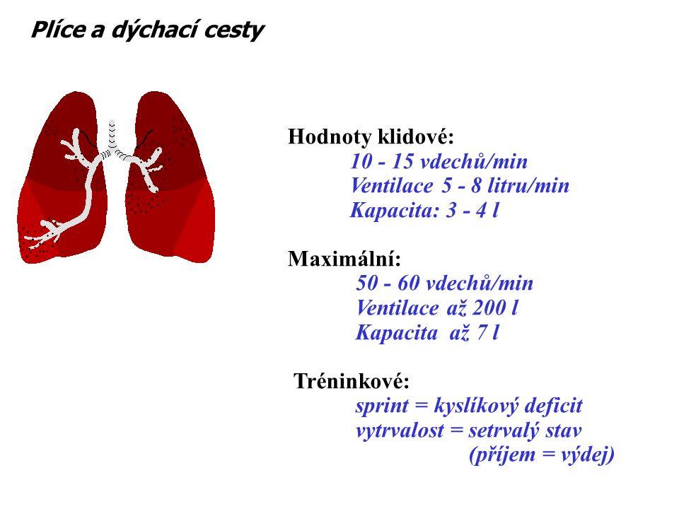 Wasserman (1999) Model přenosu kyslíku do svalů Plíce a dýchací cesty