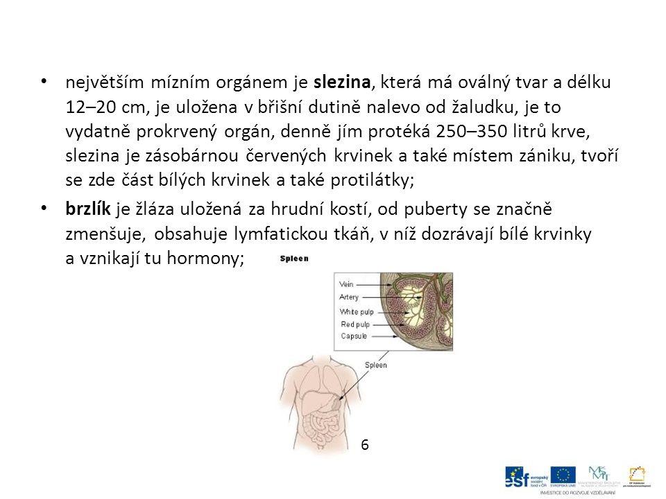 největším mízním orgánem je slezina, která má oválný tvar a délku 12–20 cm, je uložena v břišní dutině nalevo od žaludku, je to vydatně prokrvený orgán, denně jím protéká 250–350 litrů krve, slezina je zásobárnou červených krvinek a také místem zániku, tvoří se zde část bílých krvinek a také protilátky; brzlík je žláza uložená za hrudní kostí, od puberty se značně zmenšuje, obsahuje lymfatickou tkáň, v níž dozrávají bílé krvinky a vznikají tu hormony; 6