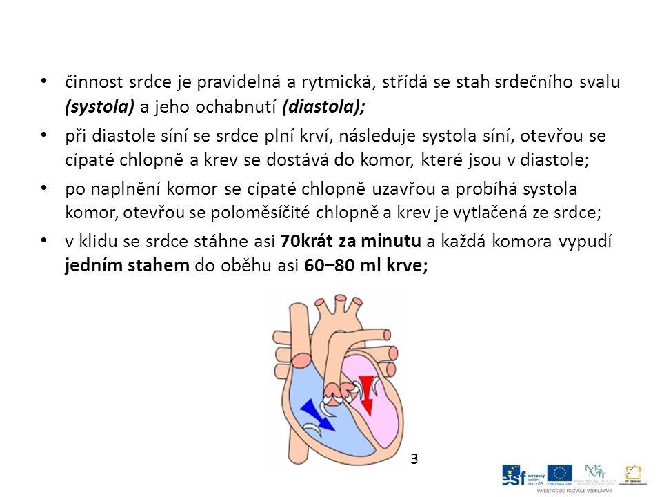 činnost srdce je pravidelná a rytmická, střídá se stah srdečního svalu (systola) a jeho ochabnutí (diastola); při diastole síní se srdce plní krví, následuje systola síní, otevřou se cípaté chlopně a krev se dostává do komor, které jsou v diastole; po naplnění komor se cípaté chlopně uzavřou a probíhá systola komor, otevřou se poloměsíčité chlopně a krev je vytlačená ze srdce; v klidu se srdce stáhne asi 70krát za minutu a každá komora vypudí jedním stahem do oběhu asi 60–80 ml krve; 3