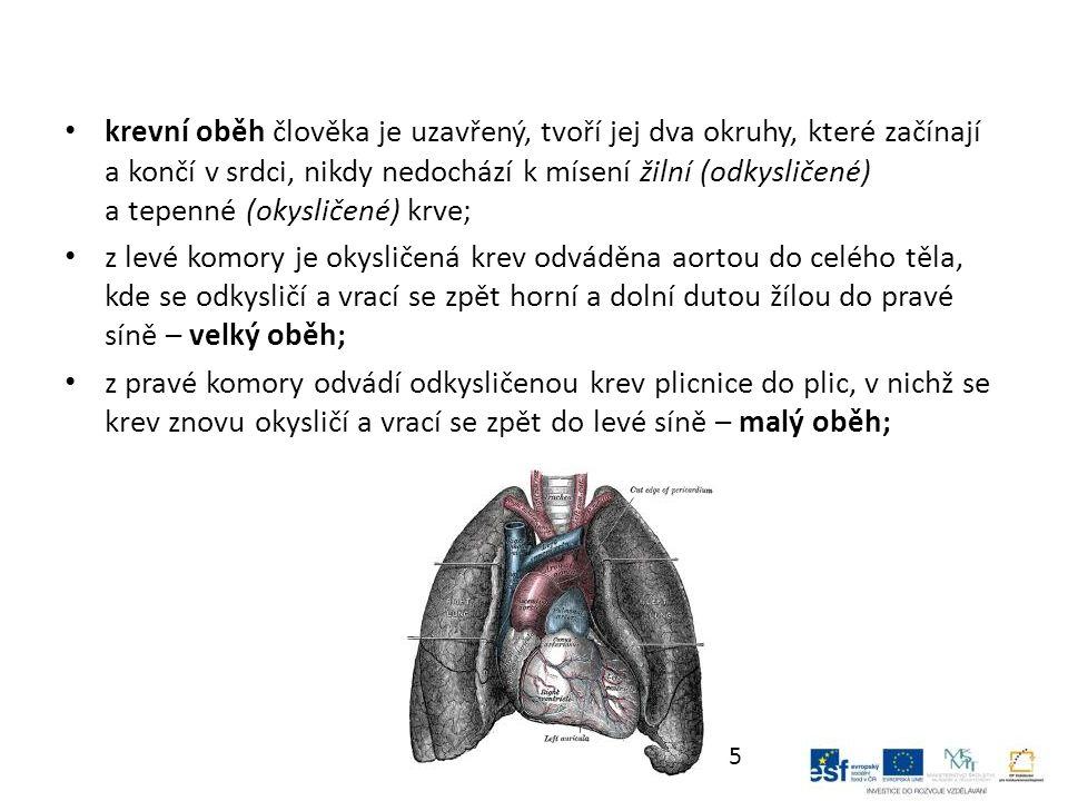 krevní oběh člověka je uzavřený, tvoří jej dva okruhy, které začínají a končí v srdci, nikdy nedochází k mísení žilní (odkysličené) a tepenné (okysličené) krve; z levé komory je okysličená krev odváděna aortou do celého těla, kde se odkysličí a vrací se zpět horní a dolní dutou žílou do pravé síně – velký oběh; z pravé komory odvádí odkysličenou krev plicnice do plic, v nichž se krev znovu okysličí a vrací se zpět do levé síně – malý oběh; 5