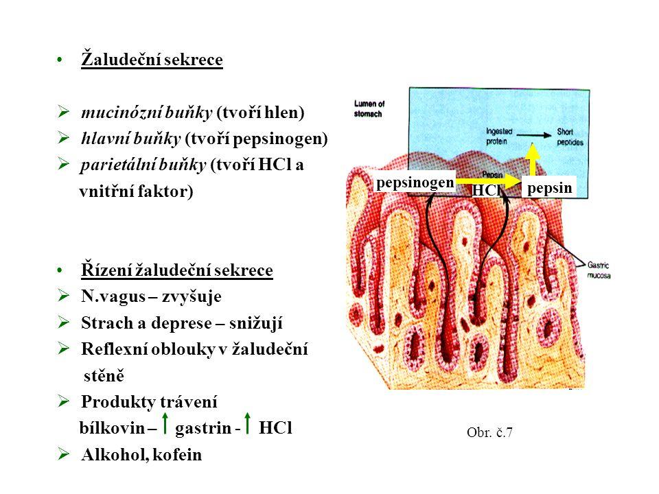 Žaludeční sekrece  mucinózní buňky (tvoří hlen)  hlavní buňky (tvoří pepsinogen)  parietální buňky (tvoří HCl a vnitřní faktor) Řízení žaludeční sekrece  N.vagus – zvyšuje  Strach a deprese – snižují  Reflexní oblouky v žaludeční stěně  Produkty trávení bílkovin – gastrin - HCl  Alkohol, kofein pepsinogen HCl pepsin Obr.