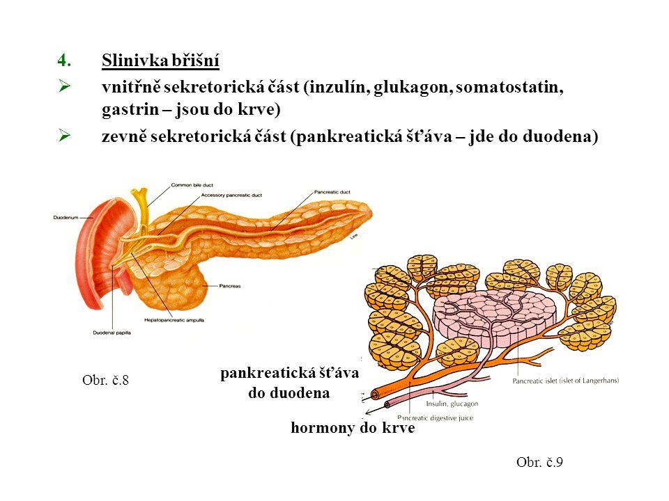 4.Slinivka břišní  vnitřně sekretorická část (inzulín, glukagon, somatostatin, gastrin – jsou do krve)  zevně sekretorická část (pankreatická šťáva – jde do duodena) Obr.
