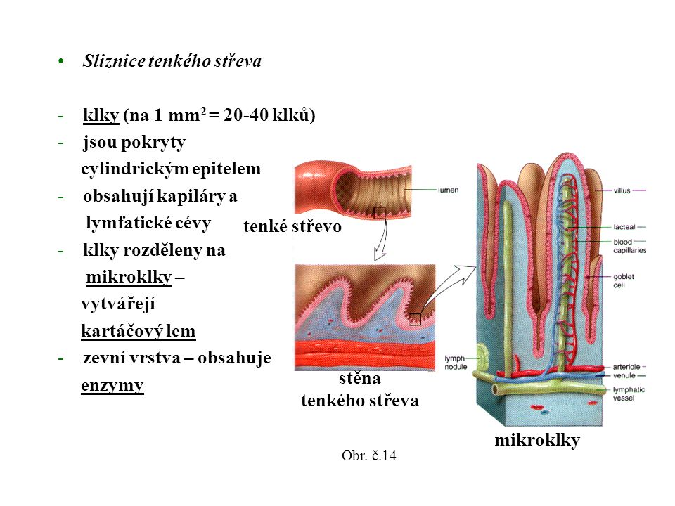 Sliznice tenkého střeva -klky (na 1 mm 2 = 20-40 klků) -jsou pokryty cylindrickým epitelem -obsahují kapiláry a lymfatické cévy -klky rozděleny na mikroklky – vytvářejí kartáčový lem -zevní vrstva – obsahuje enzymy stěna tenkého střeva mikroklky tenké střevo Obr.