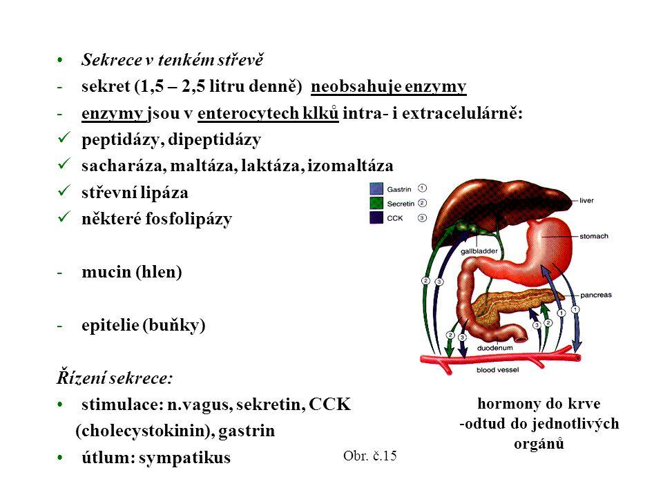 Sekrece v tenkém střevě -sekret (1,5 – 2,5 litru denně) neobsahuje enzymy -enzymy jsou v enterocytech klků intra- i extracelulárně: peptidázy, dipeptidázy sacharáza, maltáza, laktáza, izomaltáza střevní lipáza některé fosfolipázy -mucin (hlen) -epitelie (buňky) Řízení sekrece: stimulace: n.vagus, sekretin, CCK (cholecystokinin), gastrin útlum: sympatikus hormony do krve -odtud do jednotlivých orgánů Obr.