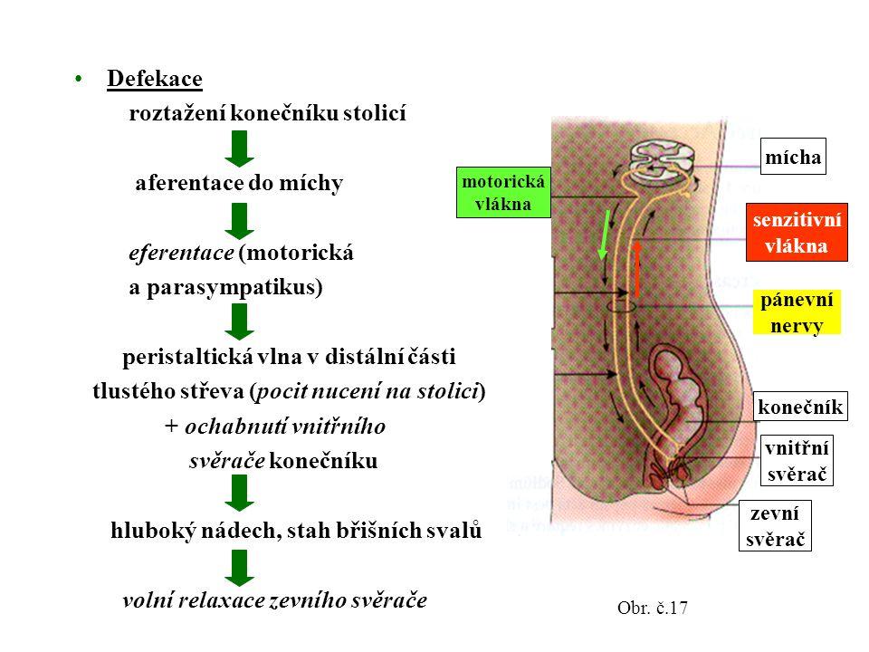 Defekace roztažení konečníku stolicí aferentace do míchy eferentace (motorická a parasympatikus) peristaltická vlna v distální části tlustého střeva (pocit nucení na stolici) + ochabnutí vnitřního svěrače konečníku hluboký nádech, stah břišních svalů volní relaxace zevního svěrače zevní svěrač vnitřní svěrač konečník pánevní nervy senzitivní vlákna mícha motorická vlákna Obr.