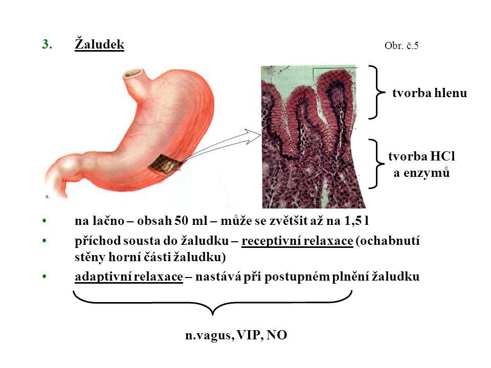 3.Žaludek na lačno – obsah 50 ml – může se zvětšit až na 1,5 l příchod sousta do žaludku – receptivní relaxace (ochabnutí stěny horní části žaludku) adaptivní relaxace – nastává při postupném plnění žaludku n.vagus, VIP, NO tvorba hlenu tvorba HCl a enzymů Obr.