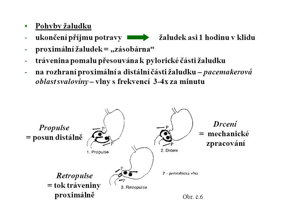 """Pohyby žaludku -ukončení příjmu potravy žaludek asi 1 hodinu v klidu -proximální žaludek = """"zásobárna -trávenina pomalu přesouvána k pylorické části žaludku -na rozhraní proximální a distální části žaludku – pacemakerová oblast svaloviny – vlny s frekvencí 3-4x za minutu Propulse = posun distálně Drcení = mechanické zpracování Retropulse = tok tráveniny proximálně Obr."""