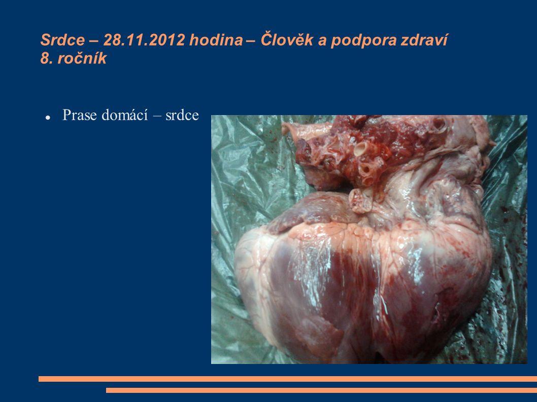 Srdce – 28.11.2012 hodina – Člověk a podpora zdraví 8. ročník Prase domácí – srdce