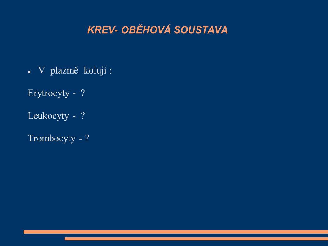V plazmě kolují : Erytrocyty - ? Leukocyty - ? Trombocyty - ? KREV- OBĚHOVÁ SOUSTAVA