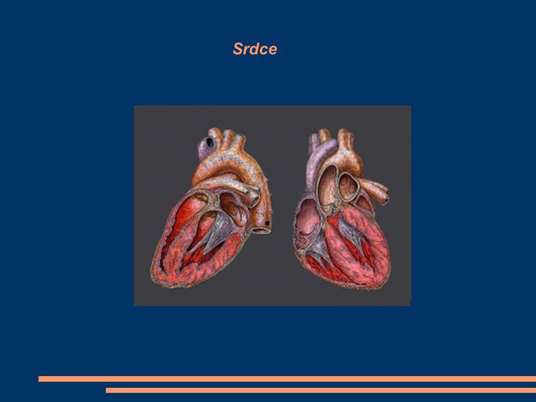 ČINNOST SRDCE Srdce pracuje pravidelně, rytmicky 68-72 stahů za minutu Stah srdečního svalu – systola Ochabnutí srdečního svalu – diastola Srdeční cyklus Za minutu přečerpá srdce cca 5 l krve, kolik l za 1 hodinu.