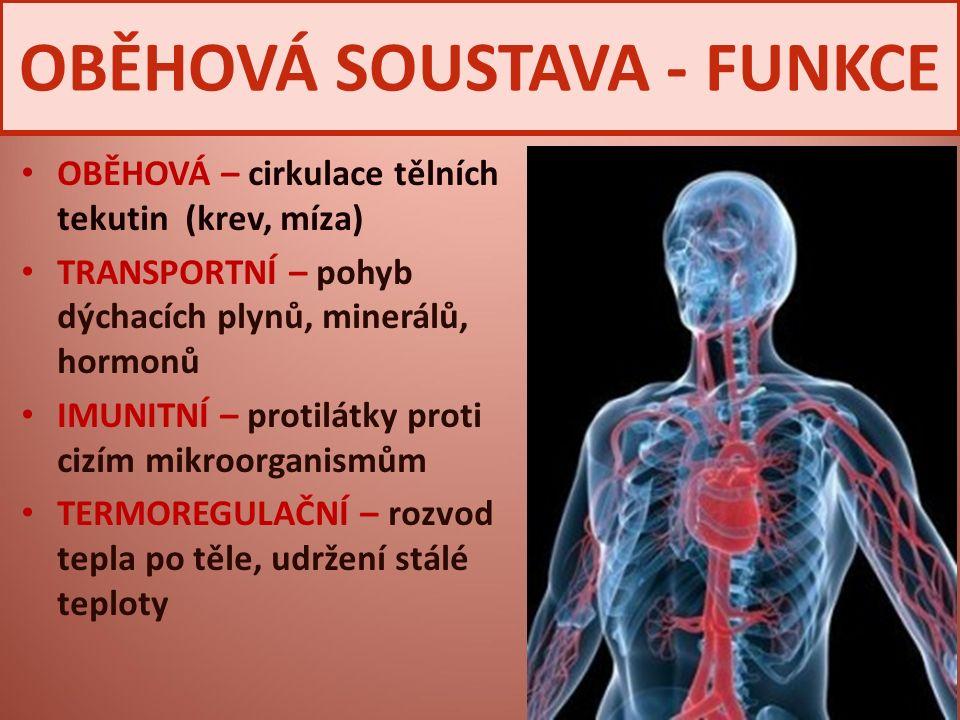 OBĚHOVÁ SOUSTAVA - FUNKCE OBĚHOVÁ – cirkulace tělních tekutin (krev, míza) TRANSPORTNÍ – pohyb dýchacích plynů, minerálů, hormonů IMUNITNÍ – protilátk