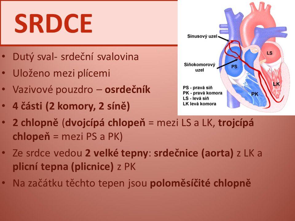 Dutý sval- srdeční svalovina Uloženo mezi plícemi Vazivové pouzdro – osrdečník 4 části (2 komory, 2 síně) 2 chlopně (dvojcípá chlopeň = mezi LS a LK,