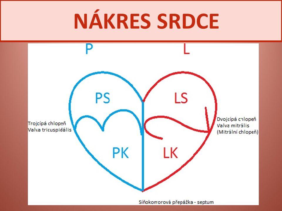 NÁKRES SRDCE
