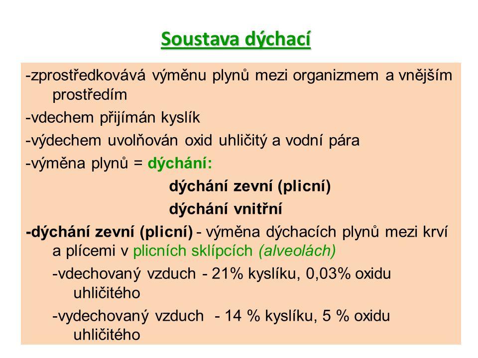 -zprostředkovává výměnu plynů mezi organizmem a vnějším prostředím -vdechem přijímán kyslík -výdechem uvolňován oxid uhličitý a vodní pára -výměna plynů = dýchání: dýchání zevní (plicní) dýchání vnitřní -dýchání zevní (plicní) - výměna dýchacích plynů mezi krví a plícemi v plicních sklípcích (alveolách) -vdechovaný vzduch - 21% kyslíku, 0,03% oxidu uhličitého -vydechovaný vzduch - 14 % kyslíku, 5 % oxidu uhličitého